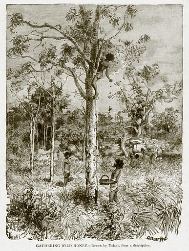 Gathering Wild Honey. Illustration from With the World