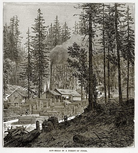Saw-Mills in a Forest of Pines. Illustration from The Countries of the World by Robert Brown (Cassell, c 1890).