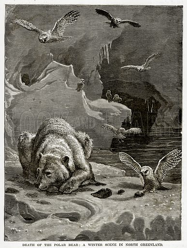 Death of the Polar Bear: A Winter Scene in North Greenland. Illustration from The Countries of the World by Robert Brown (Cassell, c 1890).