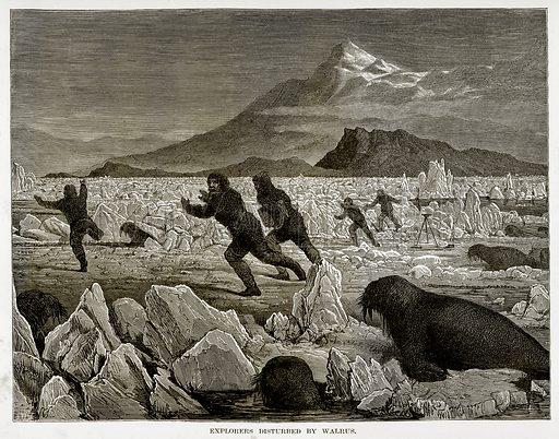 Explorers Disturbed by Walrus. Illustration from The Countries of the World by Robert Brown (Cassell, c 1890).
