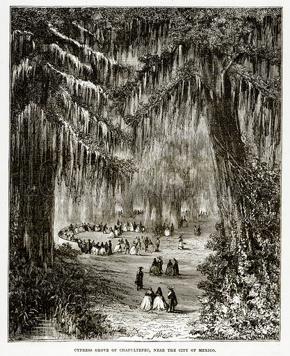 Cypress Grove of Chapultepec, near the City of Maxico. Illustration from The Countries of the World by Robert Brown (Cassell, c 1890).