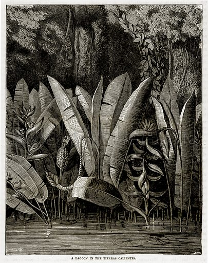 A Lagoon in the Tierras Calientes. Illustration from The Countries of the World by Robert Brown (Cassell, c 1890).