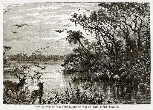 View on one of the Tributaries of the St John River, Florida. Illustration from The Countries of the World by Robert Brown (Cassell, c 1890).