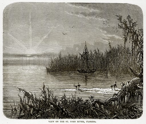 View on the St. John River, Florida. Illustration from The Countries of the World by Robert Brown (Cassell, c 1890).