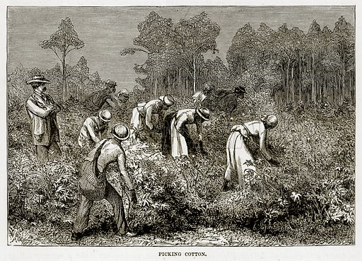 Picking Cotton. Illustration from The Countries of the World by Robert Brown (Cassell, c 1890).