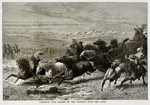 Catching Wild Horses on the Prairies with the Lasso. Illustration from The Countries of the World by Robert Brown (Cassell, c 1890).