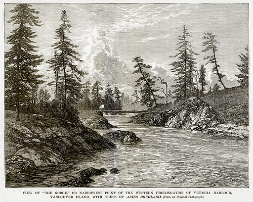 "View of ""The Gorge,"" or Nerrowest Point of the Western Prolongation of Victoria Harbour, Vancouver Island, with Trees of Abies Douglasii. Illustration from The Countries of the World by Robert Brown (Cassell, c 1890)."