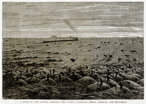 A scene in the Pampas (Showing the Pampas Railroad, Rheas, Alpacas, and Biscachas). Illustration from The Countries of the World by Robert Brown (Cassell, c 1890).