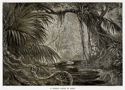 A Forest Scene in Peru. Illustration from The Countries of the World by Robert Brown (Cassell, c 1890).
