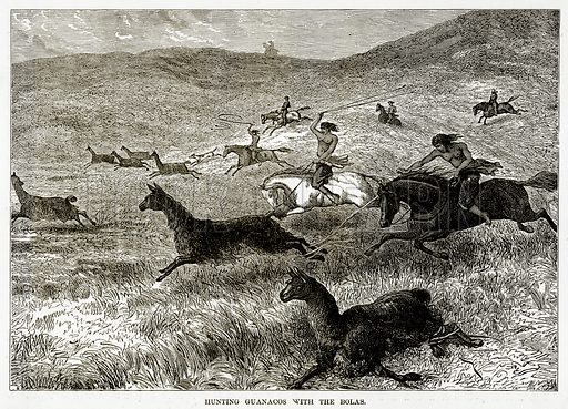 Hunting Guanacos with the Bolas. Illustration from The Countries of the World by Robert Brown (Cassell, c 1890).