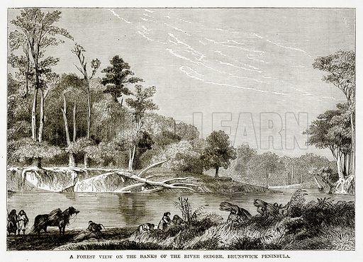 A Forest view on the Banks of the River Sedger, Brunswick Peninsula. Illustration from The Countries of the World by Robert Brown (Cassell, c 1890).