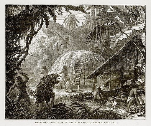 Gathering Yerba-Mate on the Banks of the Parana, Paraguay. Illustration from The Countries of the World by Robert Brown (Cassell, c 1890).