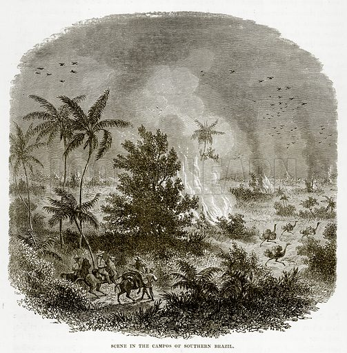 Scene in the Campos of Southern Brazil. Illustration from The Countries of the World by Robert Brown (Cassell, c 1890).