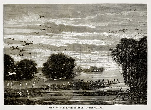 View on the River Surinam, Dutch Guiana. Illustration from The Countries of the World by Robert Brown (Cassell, c 1890).