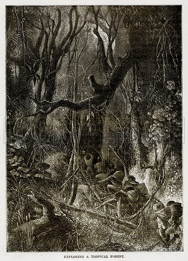 Exploring a Tropical Forest. Illustration from The Countries of the World by Robert Brown (Cassell, c 1890).