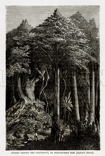 Indians Tapping the Caoutchouc, or India-Rubber Tree (Siphonia Elastica). Illustration from The Countries of the World by Robert Brown (Cassell, c 1890).