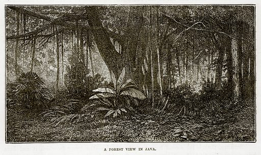 A Forest view in Java. Illustration from The Countries of the World by Robert Brown (Cassell, c 1890).