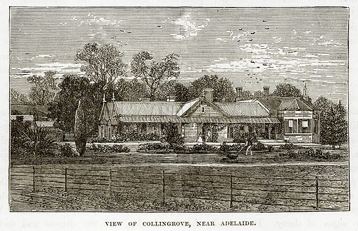 View of Collingrove, near Adelaide. Illustration from The Countries of the World by Robert Brown (Cassell, c 1890).