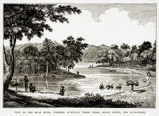 View on the Swan River, Western Australia (Grass Trees, Black Swans, and Kangaroos). Illustration from The Countries of the World by Robert Brown (Cassell, c 1890).