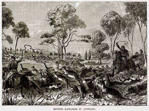 Hunting Kangaroos in Australia. Illustration from The Countries of the World by Robert Brown (Cassell, c 1890).