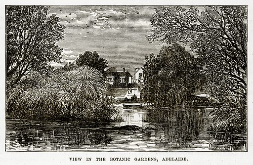 View in the Botanic Gardens, Adelaide. Illustration from The Countries of the World by Robert Brown (Cassell, c 1890).