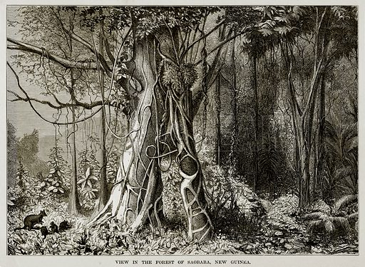 View in the Forest of Saobaba, New Guinea. Illustration from The Countries of the World by Robert Brown (Cassell, c 1890).