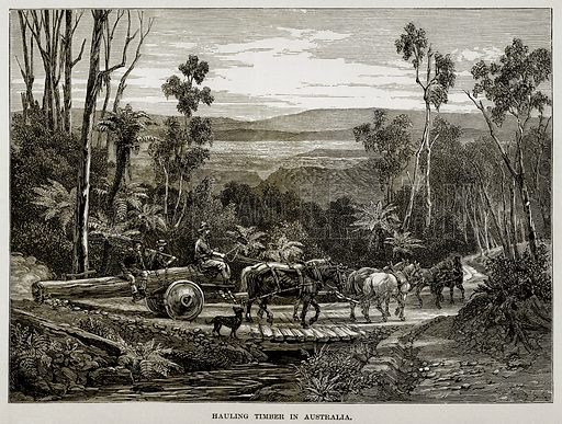 Hauling Timber in Australia. Illustration from The Countries of the World by Robert Brown (Cassell, c 1890).