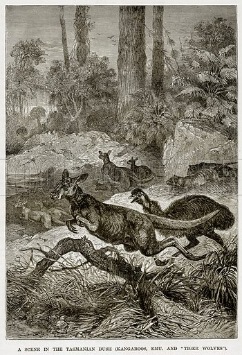 """A scene in the Tasmanian Bush (Kangaroos, Emu, and """"Tiger Wolves""""). Illustration from The Countries of the World by Robert Brown (Cassell, c 1890)."""