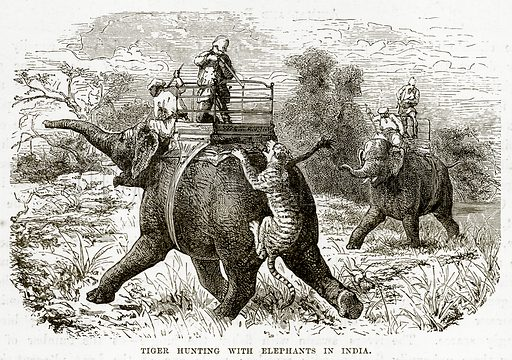 Tiger hunting with Elephants in India. Illustration from The Countries of the World by Robert Brown (Cassell, c 1890).