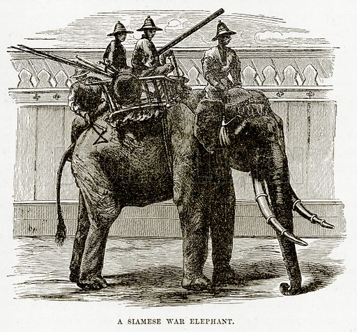 A Siamese War Elephant. Illustration from The Countries of the World by Robert Brown (Cassell, c 1890).