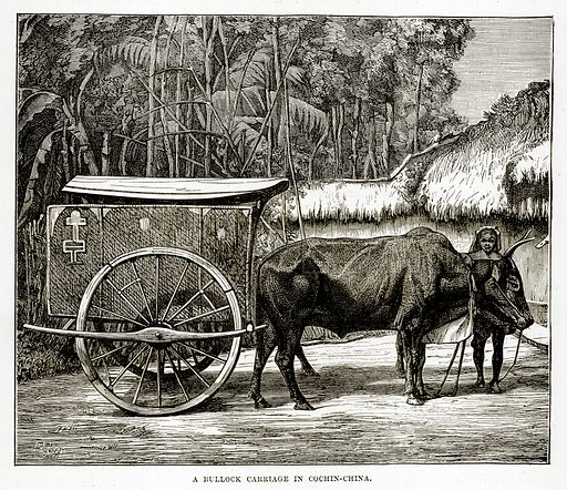 A Bullock Carriage in Cochin-China. Illustration from The Countries of the World by Robert Brown (Cassell, c 1890).