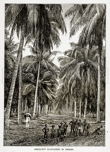 Cocoa-Nut plantation in Ceylon. Illustration from The Countries of the World by Robert Brown (Cassell, c 1890).
