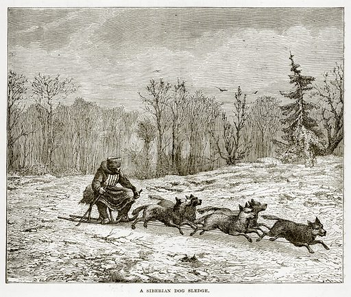 A Siberian Dog Sledge. Illustration from The Countries of the World by Robert Brown (Cassell, c 1890).