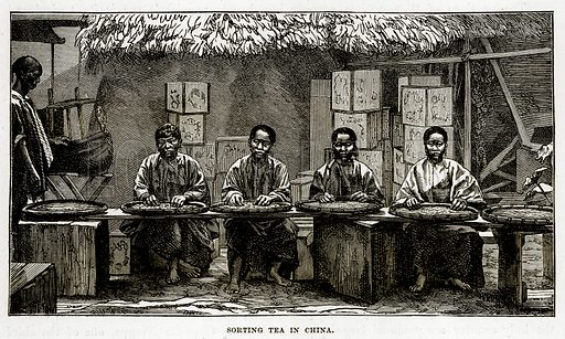 Sorting Tea in China. Illustration from The Countries of the World by Robert Brown (Cassell, c 1890).