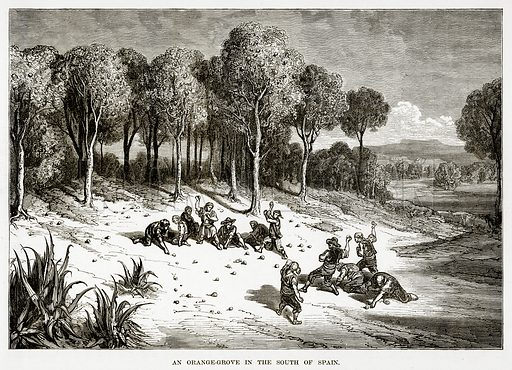 An Orange-Grove in the South of Spain. Illustration from The Countries of the World by Robert Brown (Cassell, c 1890).