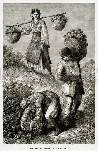 Gathering Roses in Roumelia. Illustration from The Countries of the World by Robert Brown (Cassell, c 1890).