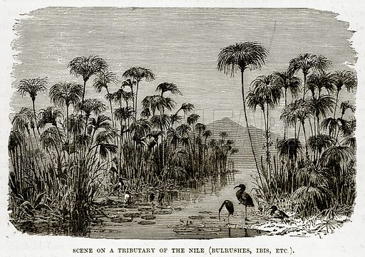 Scene on a Tributary of the Nile (Bulrushes, Ibis, etc.). Illustration from The Countries of the World by Robert Brown (Cassell, c 1890).