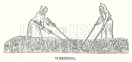 Weeding. Illustration from A Short History of the English People by J R Green (Macmillan, 1892).