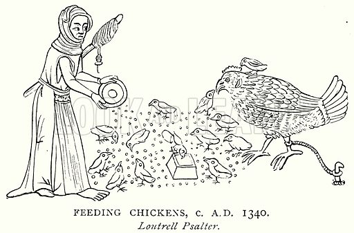 Feeding Chickens, c AD 1340. Illustration from A Short History of the English People by JR Green (Macmillan, 1892).