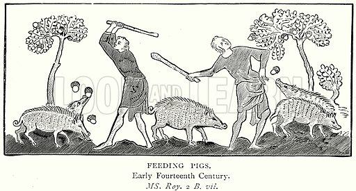 Feeding Pigs. Illustration from A Short History of the English People by J R Green (Macmillan, 1892).