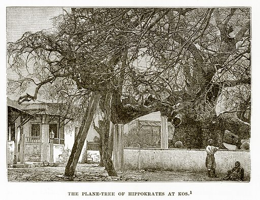 The Plane-Tree of Hippokrates at Kos. Illustration from History of Greece by Victor Duruy (Boston, 1890).