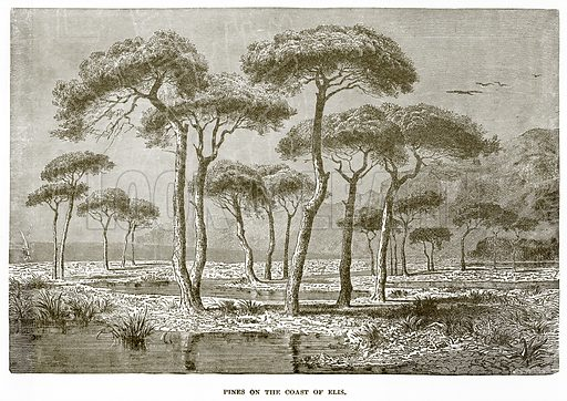 Pines on the Coast of Elis. Illustration from History of Greece by Victor Duruy (Boston, 1890).