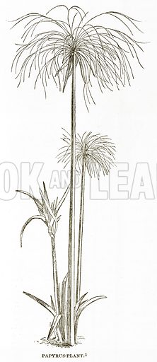 Papyrus-Plant. Illustration from History of Greece by Victor Duruy (Boston, 1890).