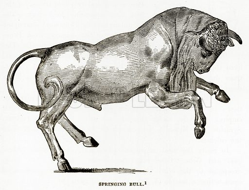 Springing Bull. Illustration from History of Greece by Victor Duruy (Boston, 1890).