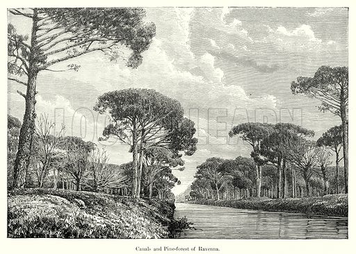 Canals and Pine-Forest of Ravenna. Illustration from History of Rome by Victor Duruy (Kegan Paul, Trench & Co, 1884).