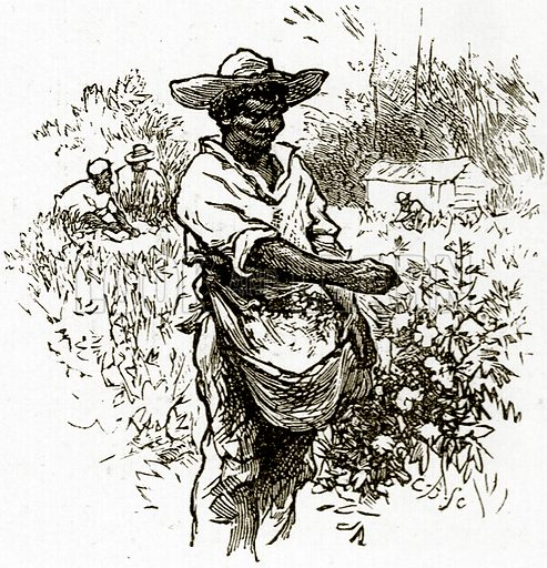 Picking cotton. Illustration from United States Pictures by Richard Lovett (Religious Tract Society, 1891).