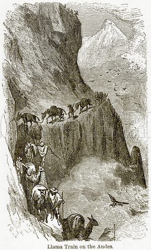 Llama Train on the Andes. Illustration from The World As It Is by George Chisholm (Blackie, 1884).