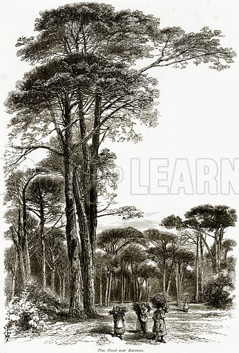 Pine Forest near Ravenna. Illustration from Picturesque Europe (Cassell, c 1880).