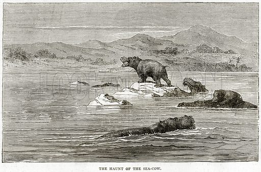 The Haunt of the Sea-Cow. Illustration from Illustrated Travels edited by HW Bates (Cassell, c 1880).