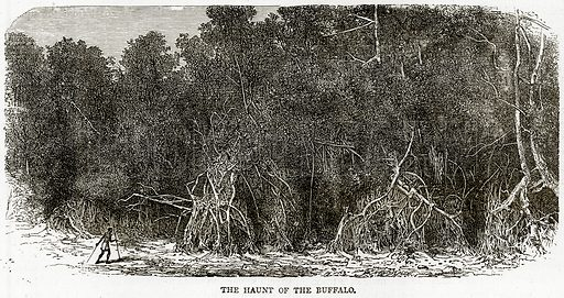 The Haunt of the Buffalo. Illustration from Illustrated Travels edited by H W Bates (Cassell, c 1880).